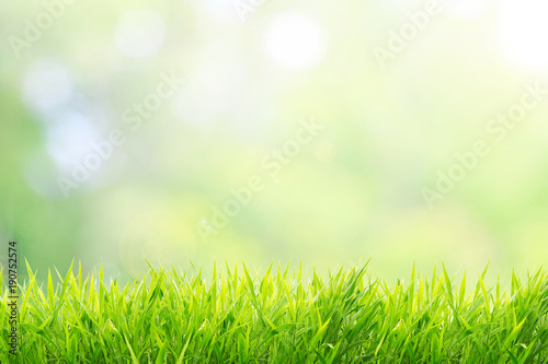 Photo sur Toile Herbe Natural green background with spring or summer