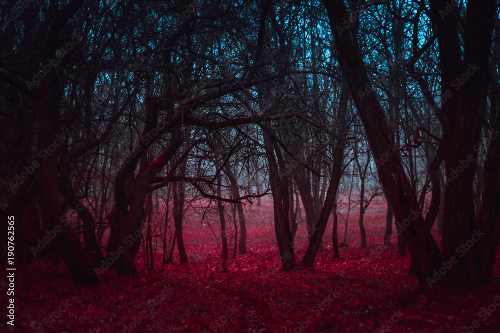 Fototapety, obrazy: Fantasy magical forest. Stranger winding branches of trees in the mist. Background mysterious atmosphere