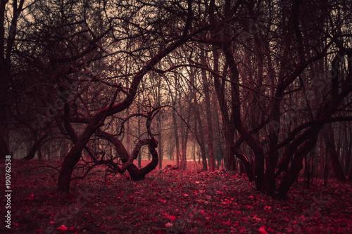 Láminas  Wallpaper dark mysterious forest in a fog
