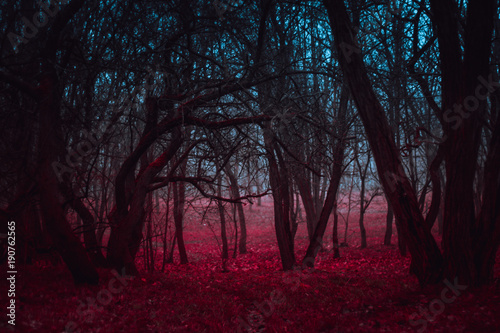 Obraz na płótnie Fantasy magical forest