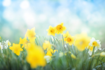 Spring flowers meadow background