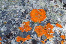 Stone Covered With Bright Oran...