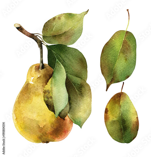 Pear with leaves
