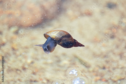 A snail floating on the surface of the water Slika na platnu