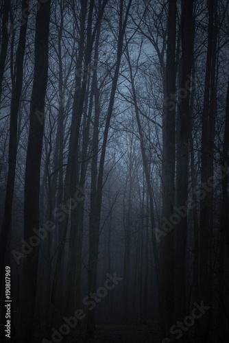 Fototapeten Wald dark forest in twilight