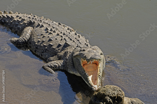 Looking into the Mouth of a Crocodile