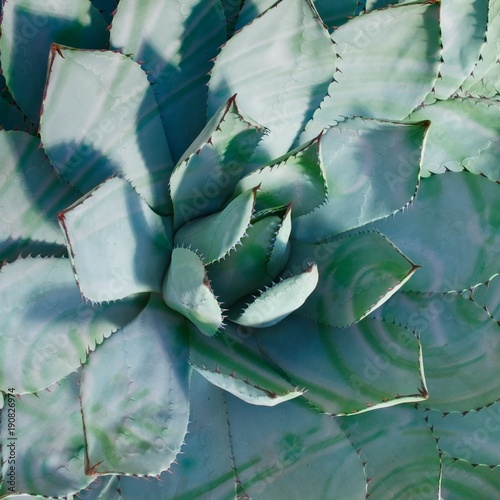 Foto op Canvas Cactus Cactus. Creative style. Colorful plant and background.