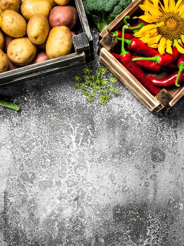 Organic food. Fresh vegetables in boxes. © Artem Shadrin