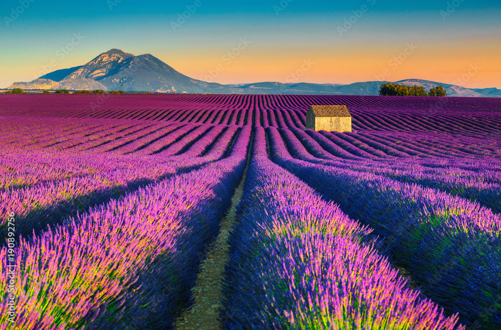 Breathtaking nature landscape with lavender fields in Provence, Valensole, France