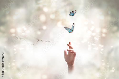 La pose en embrasure Papillon Follow your dreams and freedom concept. Metaphorical ethereal background.