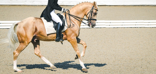 Elegant rider woman and horse. Beautiful girl at advanced dressage test on equestrian competition. Professional female horse rider, equine theme. Saddle, bridle, boots, other details.
