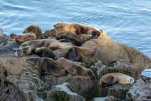 Sea Lion Lazy Day