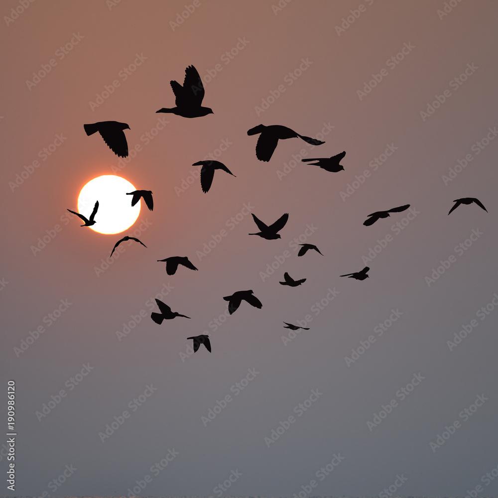 Flock of birds flying at sunrise