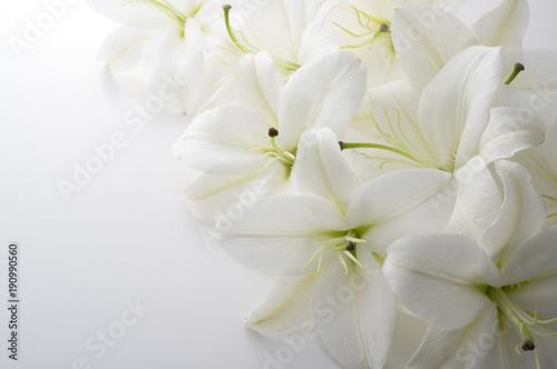 Naklejki na drzwi Biała lilia na białym tle