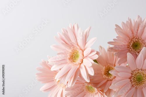 Deurstickers Gerbera ピンク色のガーベラ