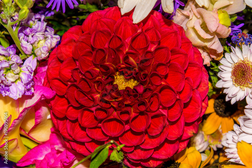 Staande foto Roses Photo of close-up abstract flower background consist of many flowers