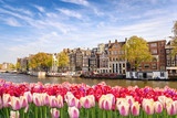 Fototapeta Tulipany - Amsterdam city skyline at canal waterfront with spring tulip flower, Amsterdam, Netherlands