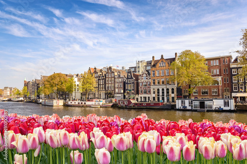 Tuinposter Tulp Amsterdam city skyline at canal waterfront with spring tulip flower, Amsterdam, Netherlands