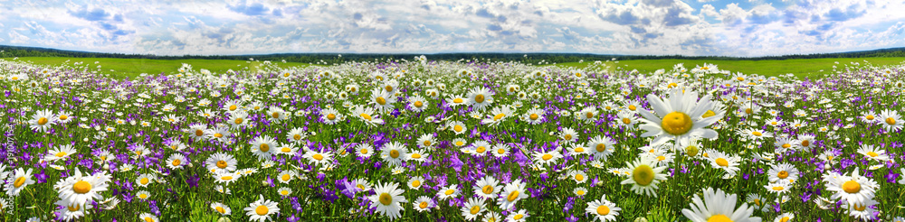 Fototapeta spring landscape panorama with flowering flowers on meadow