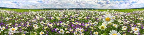 Poster Meadow spring landscape panorama with flowering flowers on meadow