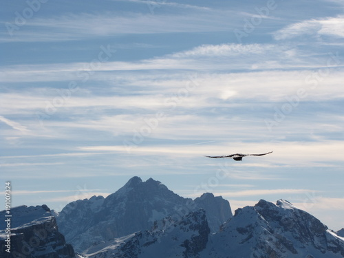 Fotografie, Obraz  dolomity i jastrząb ptak
