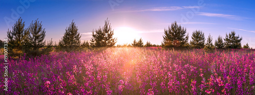Foto op Plexiglas Panoramafoto s summer landscape with the blossoming meadow, sunrise