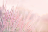 Fototapeta Kwiaty - Grass flower in soft focus and blurred with vintage style for background