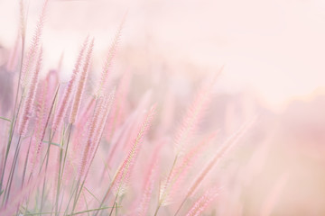 Grass flower in soft focus and blurred with vintage style for background