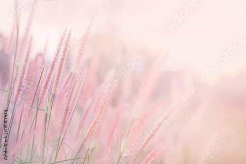 Grass flower in soft focus and blurred with vintage style for background Fototapeta