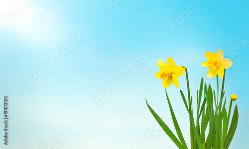 Nature spring background with yellow flowers daffodils buy this nature spring background with yellow flowers daffodils mightylinksfo