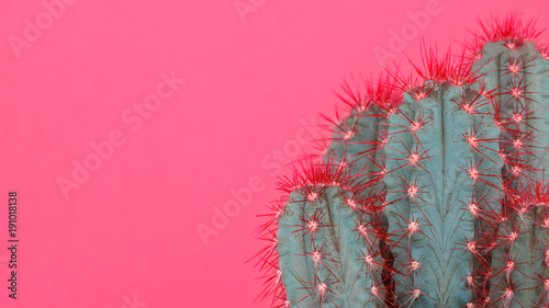 Trendy pastel pink coloured minimal background with cactus plant. Cactus plant close up. Fashion style cacti concept. - 191018138