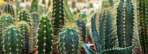 Photo sur Toile Cactus cactus garden desert in springtime.