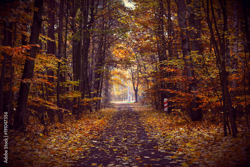 Foto op Plexiglas Bos Road in the autumn forest.Yellow autumn landscape.