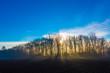 Sonnenaufgang am Waldrand