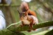 Jeunes écureuils grimpant dans un arbre
