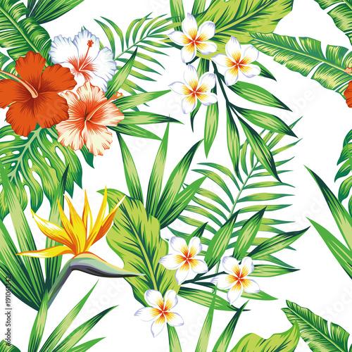 kompozycja-tropikalnych-roslin-deseniowy-bialy-tlo