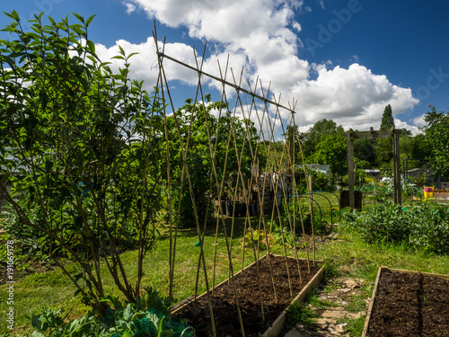 Allotment garden with canes arranged on a raised bed and blue sky in the backgro Wallpaper Mural