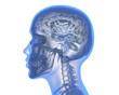 canvas print picture - Human brain