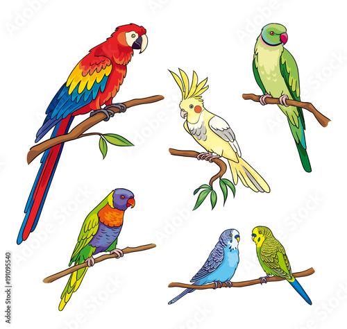 Different parrots - vector illustration Fotomurales