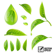 Realistic Vector Set Of Elements (tea Leaves And Dew Drops Or Oil)