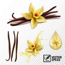 Realistic Vector Set Of Isolat...