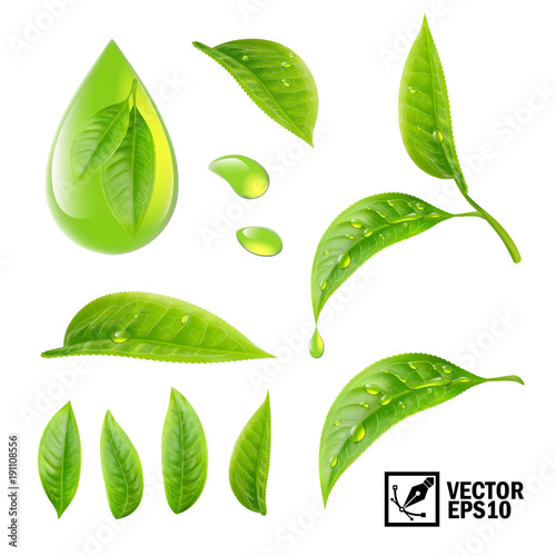 Obraz Realistic vector set of elements (tea leaves and dew drops or oil) - fototapety do salonu