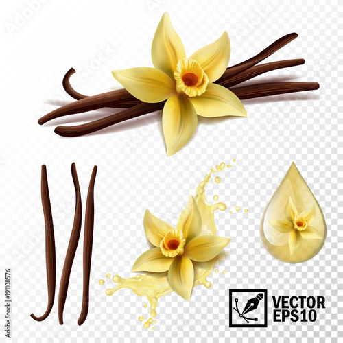 Fotomural Realistic vector set of isolated elements (vanilla flower and pods or sticks, va