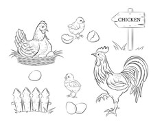 Chicken. Chickens, Eggs And Ro...