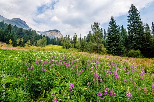 Valokuva  Flower Fields of Emerald Lake