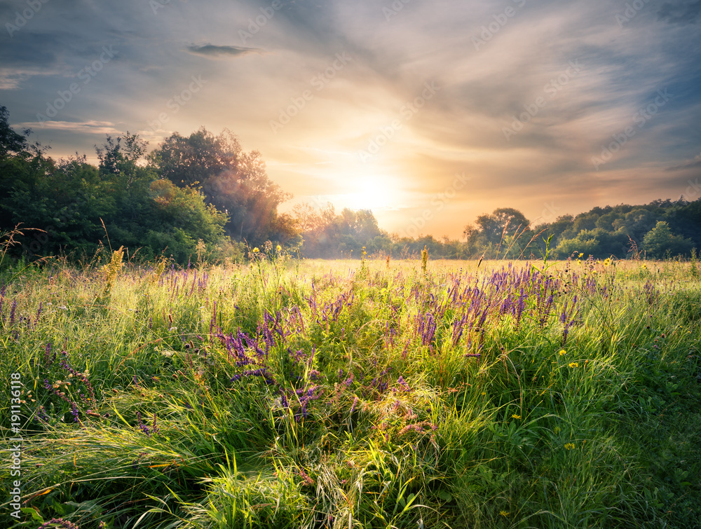 Fototapety, obrazy: Meadow with wildflowers under the setting sun