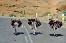 The Donkeys On The Road In Ethiopia