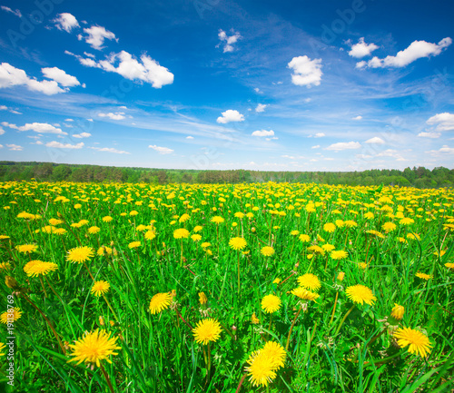 Staande foto Groene Yellow flowers hill under blue sky