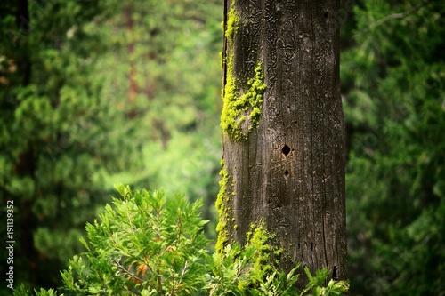 Fotografie, Obraz  A hole in the tree