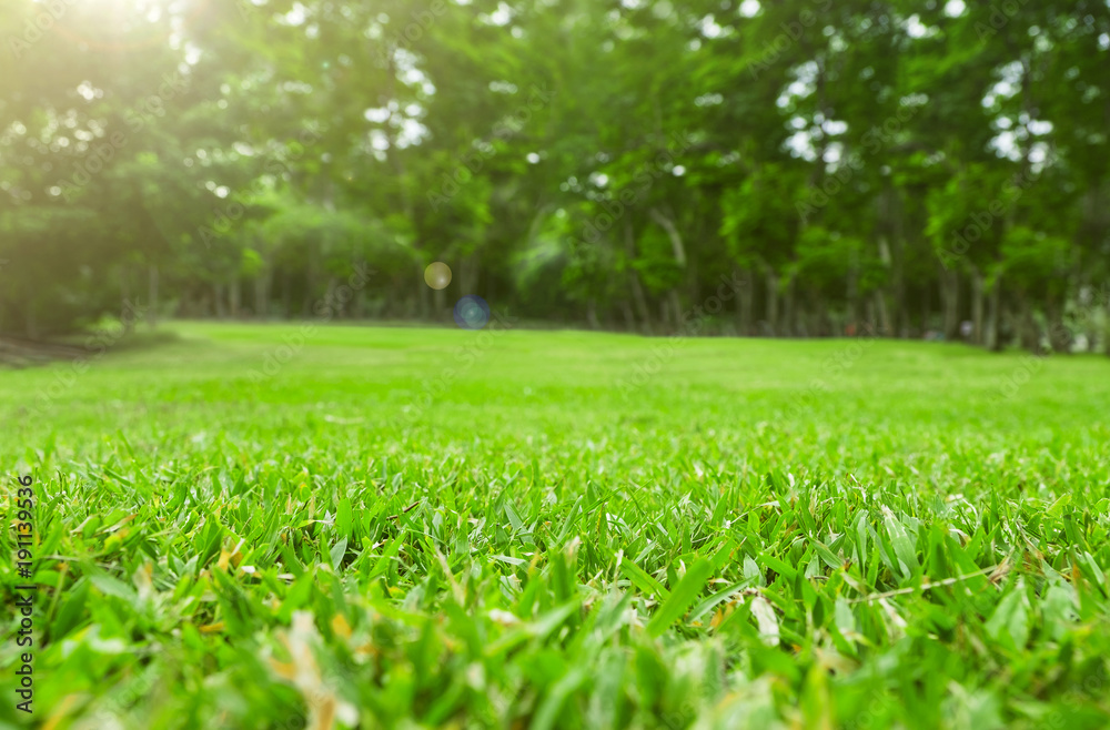 Fototapety, obrazy: Close up green grass field with tree blur park background,Spring and summer concept